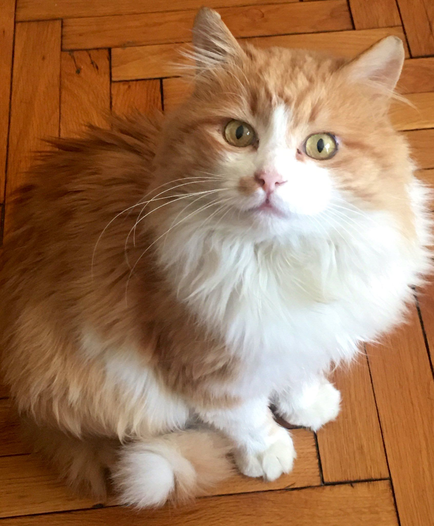 Picture of Aslan the foster cat
