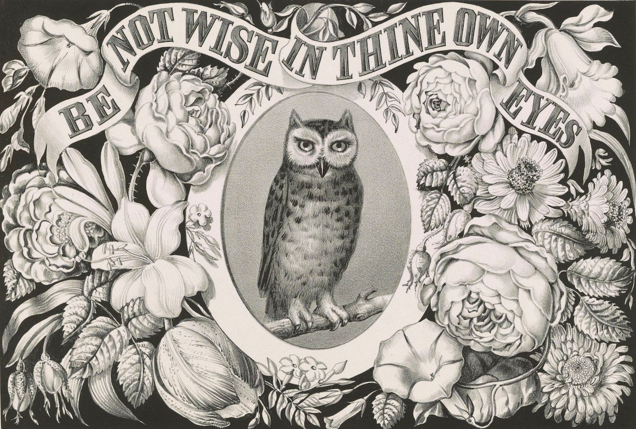 """Image of an owl with a quote from the Bible (""""Be not wise in thine own eyes"""")"""